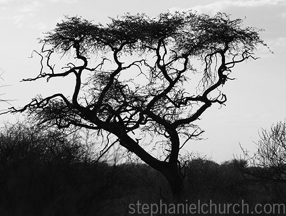 Africa 098